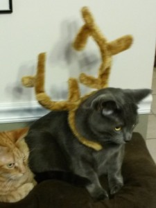 """General, go put on your Christmas antlers and sit in timeout!"""